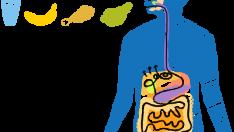 Sindirim Sistemi Rahatsızlıklarında Beslenme